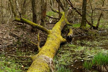 fallen tree by the lake