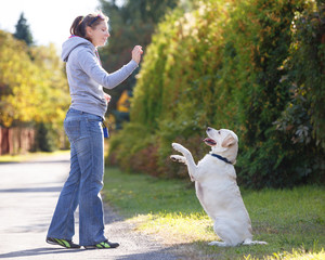 Beautiful woman training dog breed labrador retriever