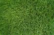 Leinwandbild Motiv Rasen-Gras