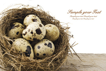quail eggs in nest