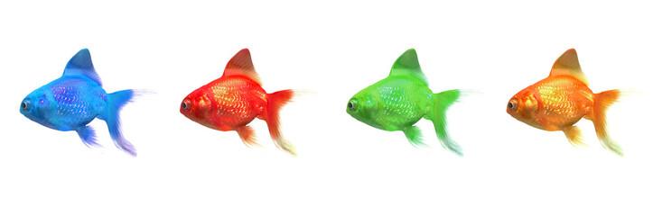 Pesci colorati, stampa RGB, CMYK, tipografia