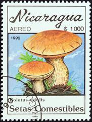 Boletus edulis mushrooms (Nicaragua 1990)