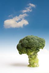 Albero dei broccoli