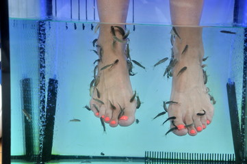 Fish spa pedicure with the fish rufa garra