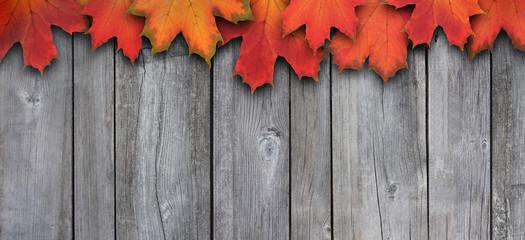 Herbstblätter vor grauer Holzwand  2
