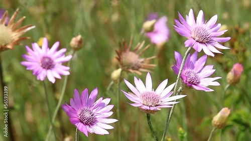 Beautiful wild flowers closeup