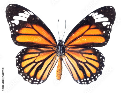 Deurstickers Vlinder monarch butterfly isolated on white background