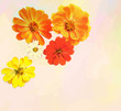 Greeting card with bouquet of zinnias