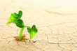 canvas print picture - Plant sprouting in the desert