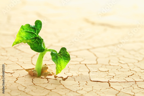 canvas print picture Plant sprouting in the desert