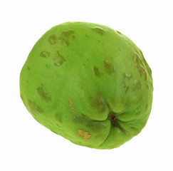 Chayote Vegetable Bottom