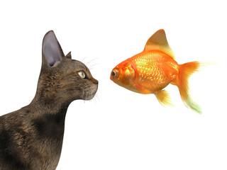 Gatto, pesce, closeup, anatomia 3d, profilo, felino veterinario