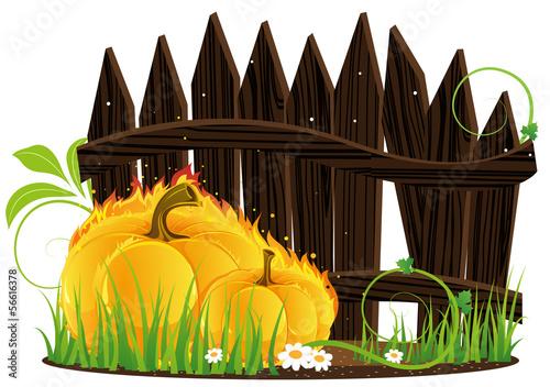 Burning pumpkins against a wooden fence