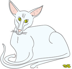 chat oriental shorthair blanc sphinx