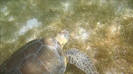 tartaruga caretta caretta sottomarina