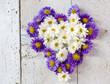 Herzliche Blumengrüße im Herbst: Astern