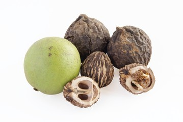 ripe nuts of black walnut tree