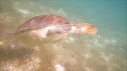 tartaruga marina sott'acqua