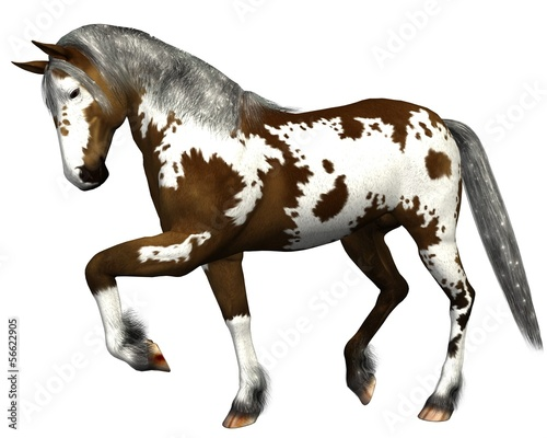 Horse dark brown