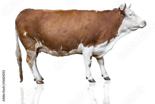 Deurstickers Koe cow isolated on white