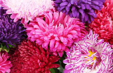 Bright aster flowers, close up
