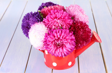 Bright aster flowers in watering can,