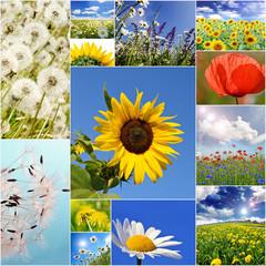 Sommer: Wiesen, Felder und Blumen