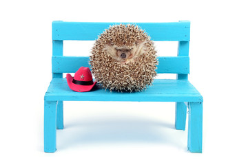 Hedgehog ball on a chair.