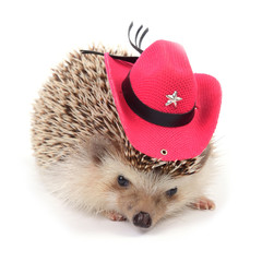 Hedgehot with red cowboy hat.