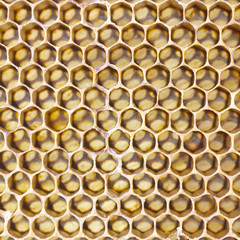 An image of fresh honey in comb