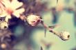 macro shot of cute pink aster