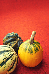 Assorted composition of colorful and decorative mini pumpkins