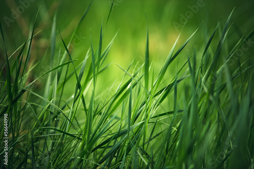 In einem stillen grasgrünen Kino