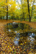Autumn landscape with colored leaves and reflection in water
