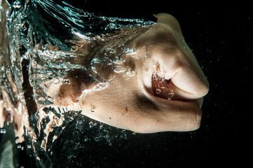 水中をパンチする拳
