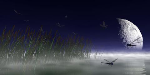 Seeufer bei Nacht mit Libellen