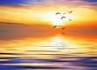 volando hacia el sol