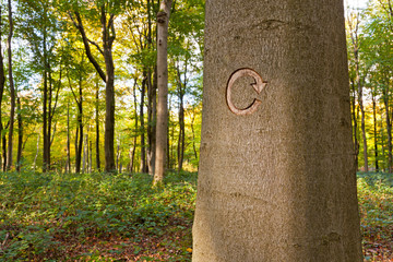 Recycle symbol carved into a tree
