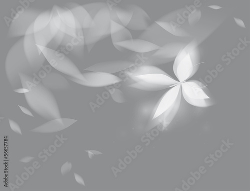 Shining butterfly / Black-and-white floral background