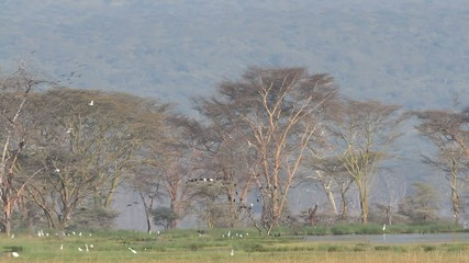 Waterbirds, Lake Nakuru National Park, Kenya