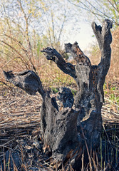 resti di un tronco carbonizzato