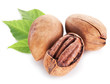 Pecan nuts with leaves.