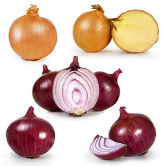 collection set of onion isolated over white background