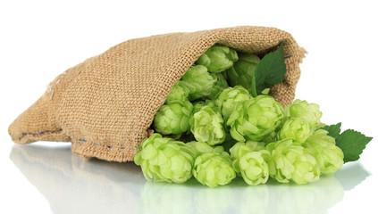 Fresh green hops in burlap bag, isolated on white