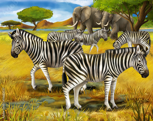 Safari - zebras - illustration for the children