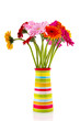 Gerber flowers in striped vase