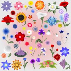Flower Icons Set - Isolated On Background