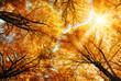 Die Herbstsonne scheint durch Baumkronen