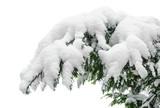 Fototapety Schneebedeckter Tannenzweig