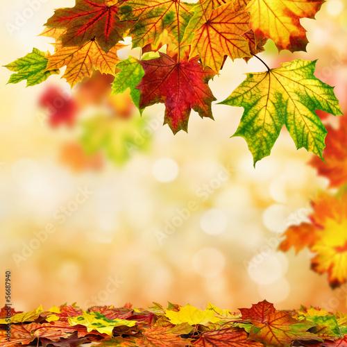 canvas print picture Herbst Hintergrund umrahmt mit buntem Laub